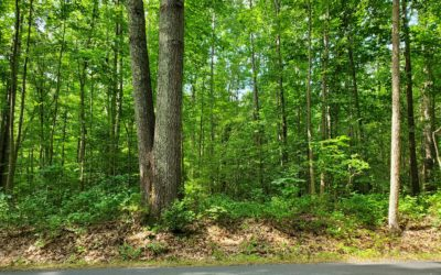 Beautiful 11+ acre Wooded Lot for Sale  ~  Call Ellen Otey (804) 241-4314